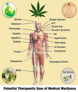 cannabistherapy