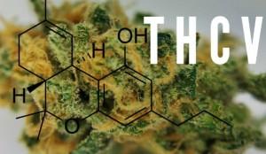 what-is-tetrahydrocannabivarin-THCV-599x348