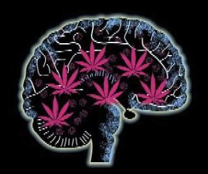 brain_on_marijuana-flip-300x250