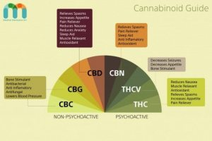 cannabonoid-guide-636x424