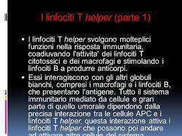 linfo-t2